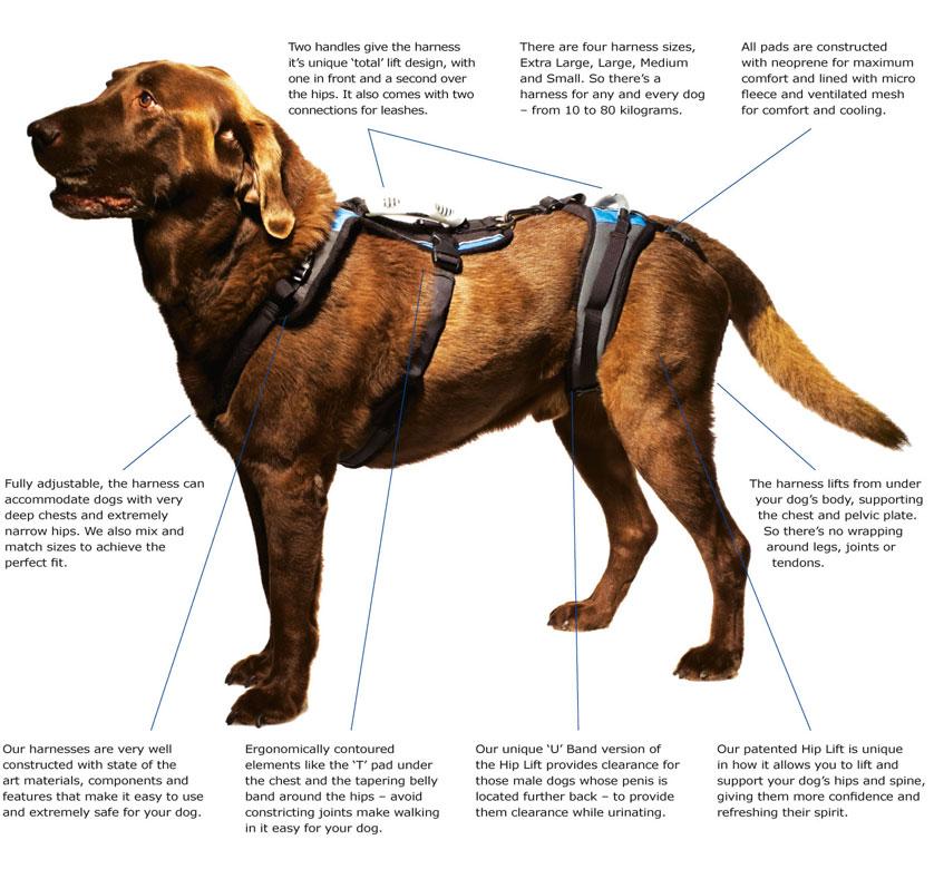 hip orthopedic dog harness